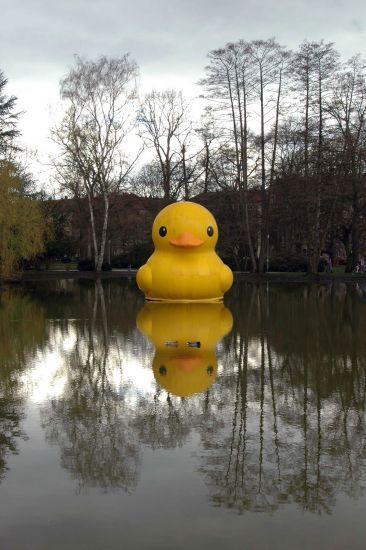 giant inflatable rubber duck florentijn hofman nuremberg germany (2)