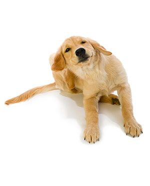 Pet allergy symptoms treatment