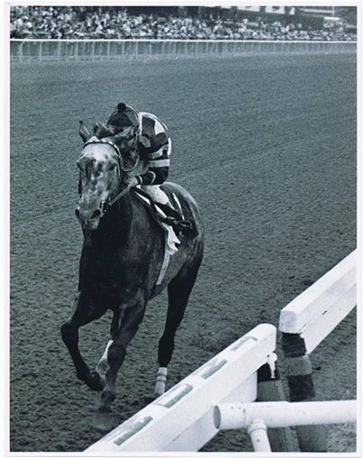 Spectacular Bid - 1980 Woodward Stakes - His famous 'walkover', that rarest of honors given to a horse, where no other horse enters the race, because he is so dominant. Often a horse will enter for second money, but this is really the highest acknowledgement of brilliance. Secretariat was never given that honor. Bid, in my opinion, the greatest racehorse ever. Like people (and I almost think of him as a person), in many fields, he transcended what he did.