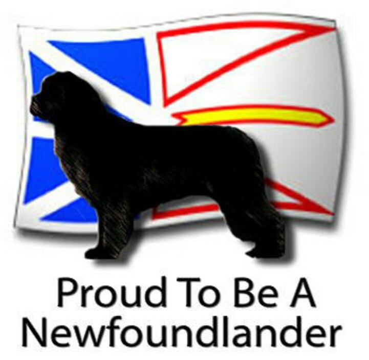 i like to go back to Newfoundland again to see family