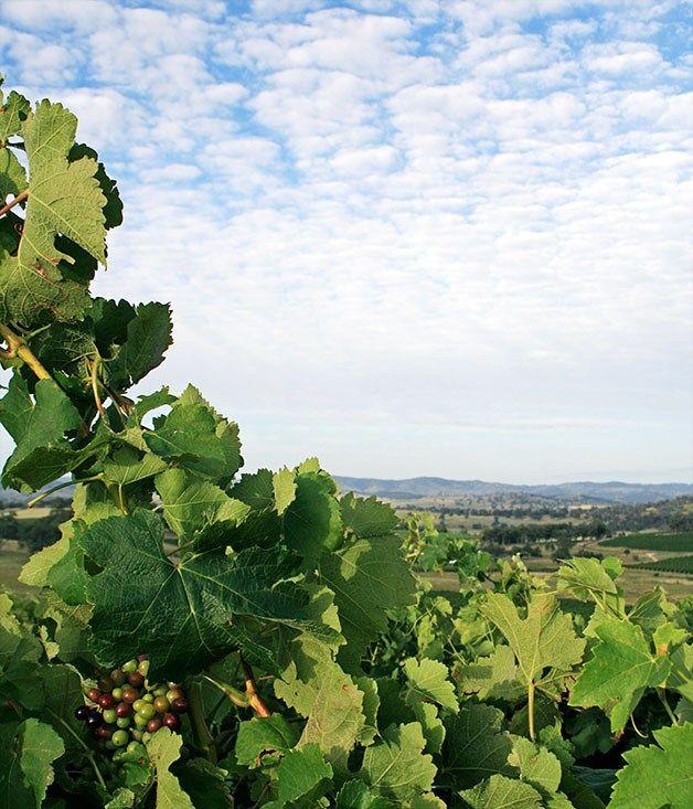 Great wine drives: Mudgee - Gourmet Traveller