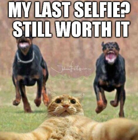 http://global.johnnybet.com/francia-rumania-eurocopa-2016-pronosticos#picture$id=5404 #selfie #keepcalm #funny #lol #follow