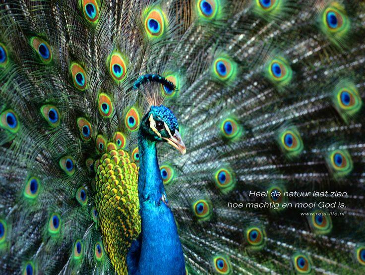 inspriratie pauw verven. kleuren mengen . blauw/groen/geel/bruinachtig/blauwgroen. evt glitters erop strooien als het klaar is..