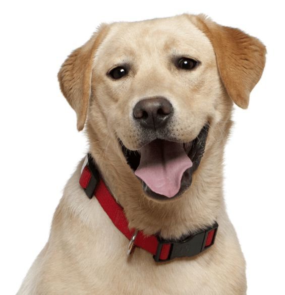Pitbull Puppies Idaho USA Craigslist - Puppy And Pets