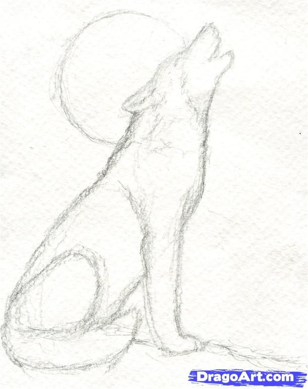 Step 5. How to Draw a Howling Wolf