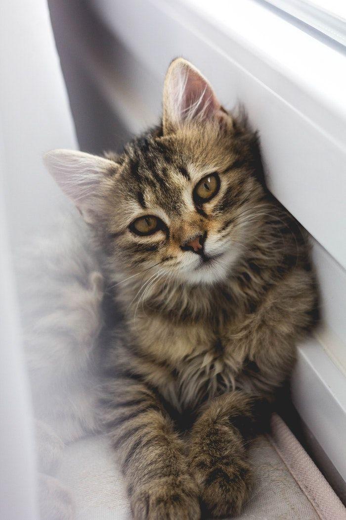 1001 Images Pour Le Parfait Fond D Ecran Pour Fille Chatons Tigres Image Chaton Fond D Ecran Chat
