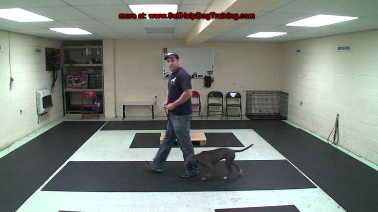 How to Train a Dog to Heel - Dog Training by K9-1.com - Phase 1