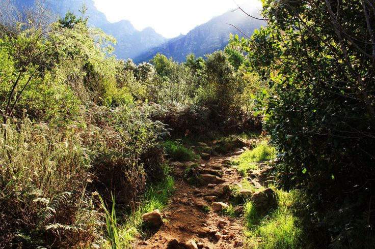 Nature in all its glory #littleworttrail #newlandsforest