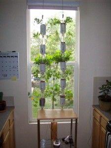 WindowfarmWindowfarm, Ideas, Water Bottle, Windows Farms, Green, Plants, Vegetables Gardens, Herbs Gardens, Small Spaces