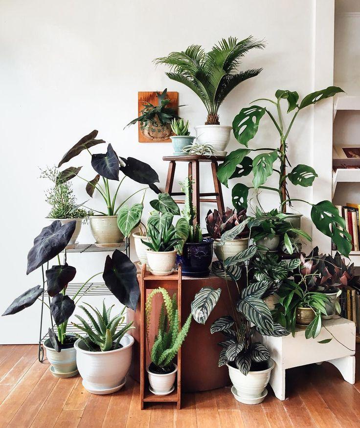 300 Square Feet of planted goodness nestled inside Maven Collective vintage in SE Portland - the Pistils Nursery Pop-up Plant Shop!