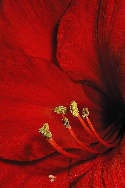 Macro Nature Flower