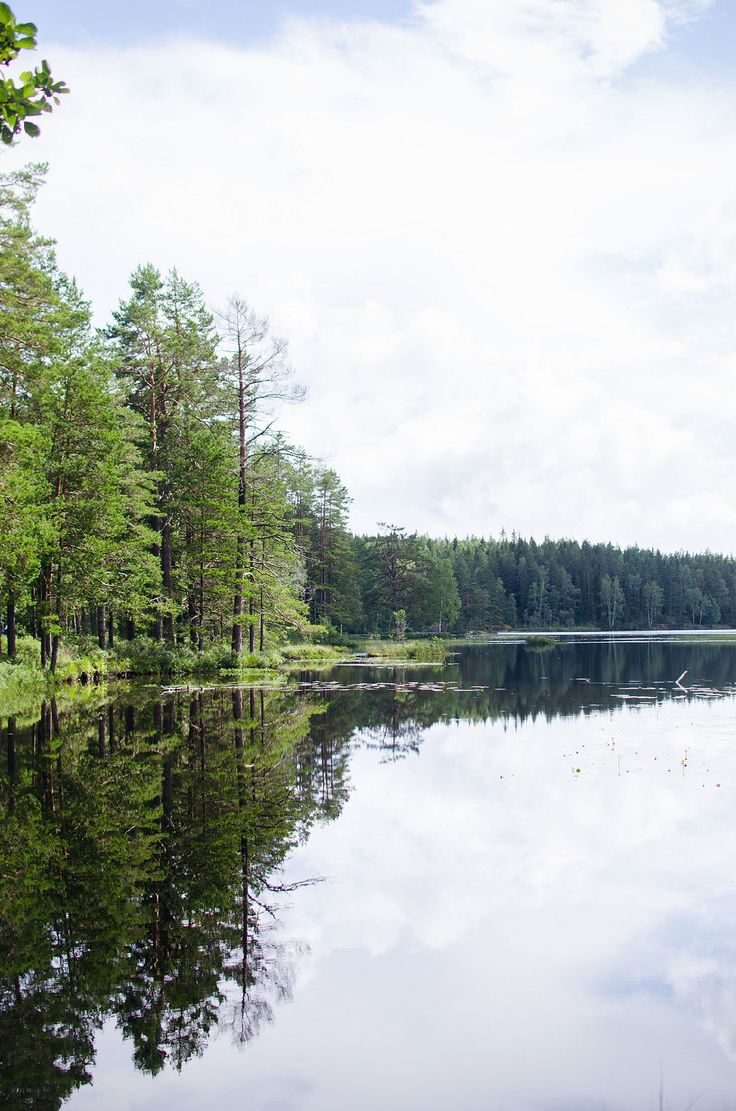 """fagertärn_tiveden. Neck (water spirit) In Scandinavia, water lilies are called """"nix roses"""" (näckrosor/nøkkeroser). A tale from the forest of Tiveden relates of how the forest had its unique red water lilies through the intervention of the nøkken"""