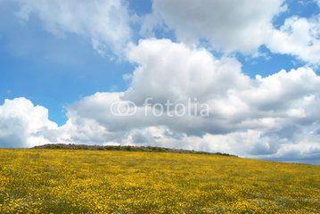 Collina con fiori di margherite gialle e nuvoloni nel cielo #microstock #marketing #webdesign #design #WebContent #SEO #csstemplates #css #HTML5 #Websites #web20k #web2015 #web