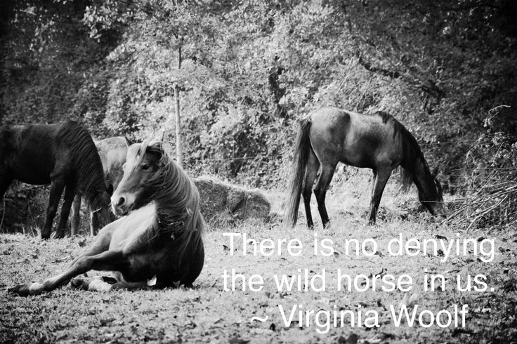 There is no denying the wild horse in us. ~ Virginia Woolf  Stephanie Rowcliffe Photography