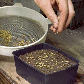 all about starting seeds: Gardening Yard, Gardens Ideas, Seedstart, Outdoor, Start Seeds, Seed Starting, Seeds Start, Fine Gardens, Gardens Growing