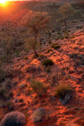 sunrise Australian outback