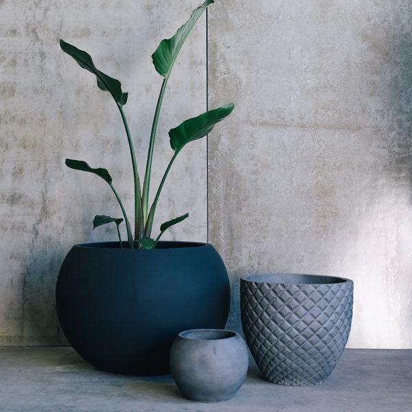 Pot Plants by The Balcony Garden | Garden Pots | Pot Plants | Planters | Flower Pot| Designer Pots