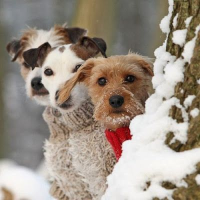 Dogs Wearing Their Christmas Sweaters