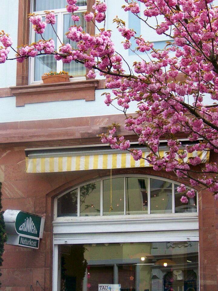 Grünkern, one of my favourite restaurant in Francfort, vegetarian ;-)