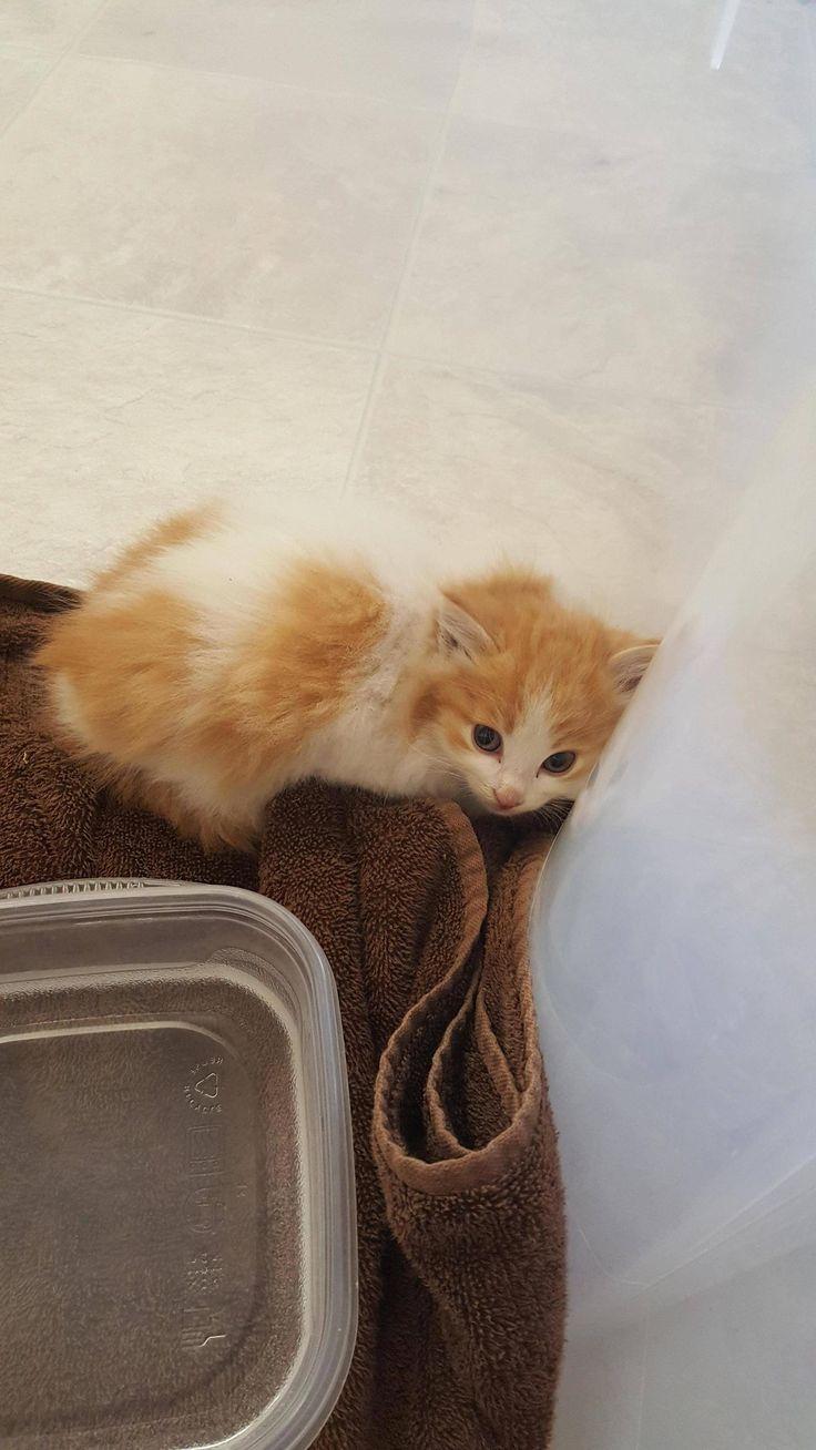5593 best kittens nothing but tiny kittens images on pinterest