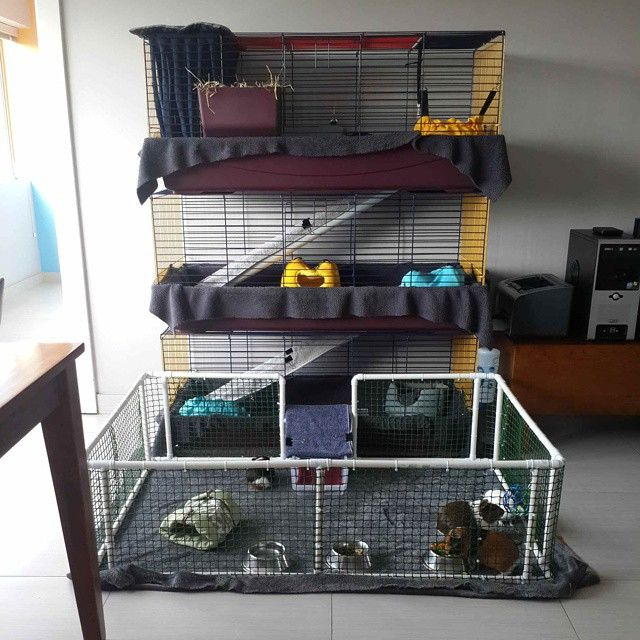 118 best guinea pig cage ideas cavy diy images on pinterest for Diy playpen for guinea pigs
