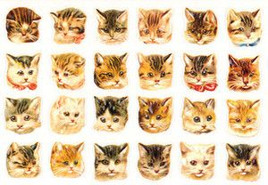 Group Of Tumblr Cats Wallpaper Cat