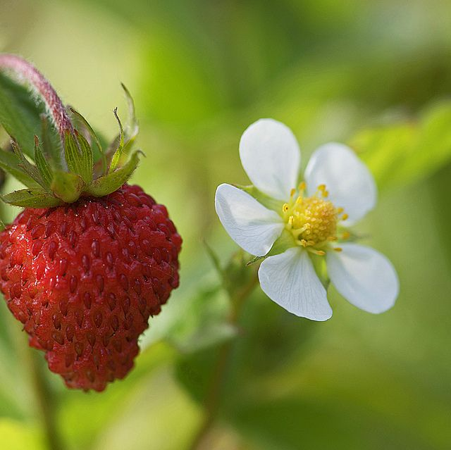 Strawberry... I can almost taste it