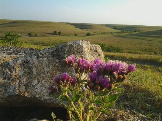 The natural environment essay