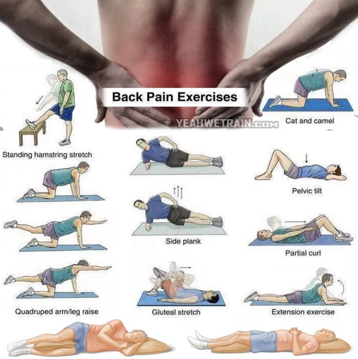 Back Pain Exercises - Healthy Back Workout Training Lower Higher