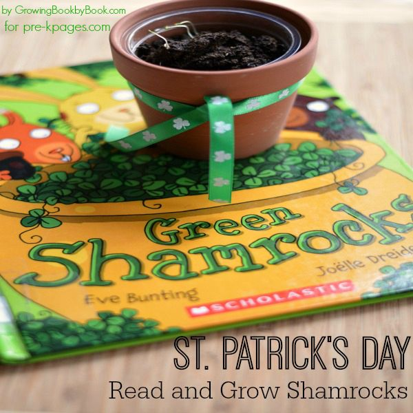 Growing Shamrocks in Preschool and Kindergarten for St. Patrick's Day