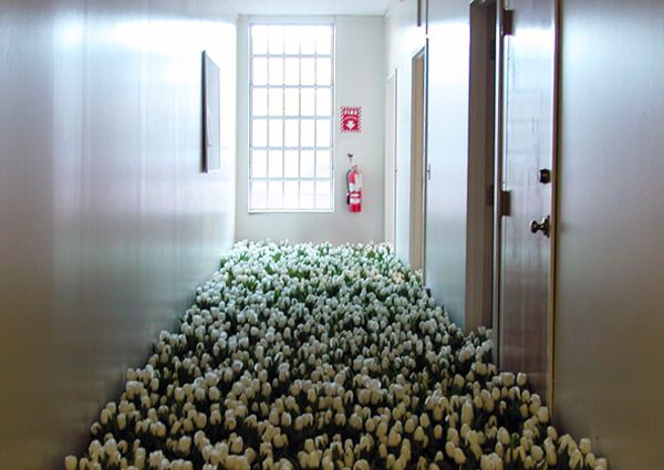 Thousands of flowers were placed in the old hallways and rooms of the Massachusetts Mental Health Center before its demolition. - Anna Schuleit's installation
