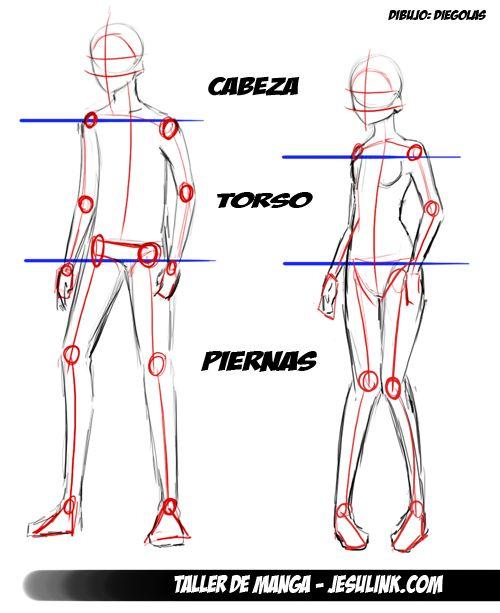 Ms de 25 ideas increbles sobre Dibujo del esqueleto humano en