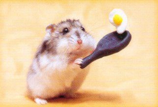 Hamster cooking egg. CUTE ^O^