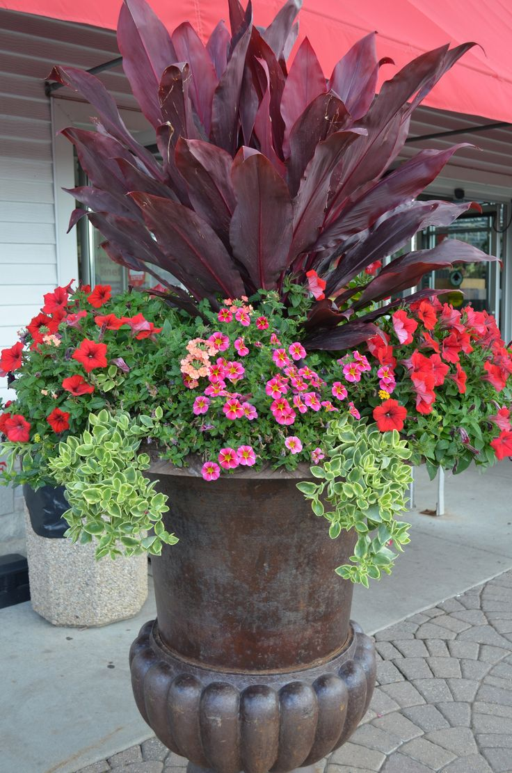 Great potting idea from our very own Maria! What's inside: (from left to right) Red supertunia, lantana, mezoo vine, cordyline, million bells and verbena.
