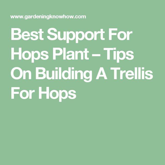 Best Support For Hops Plant – Tips On Building A Trellis For Hops