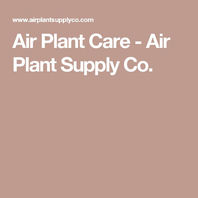 Air Plant Care - Air Plant Supply Co.
