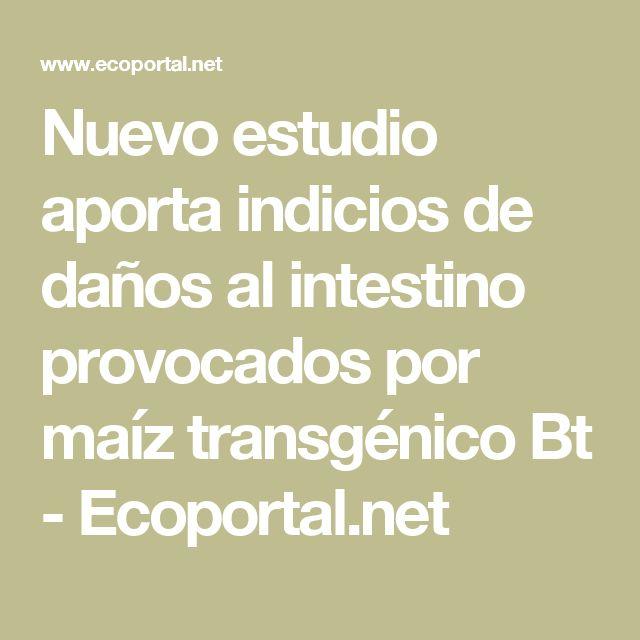 Nuevo estudio aporta indicios de daños al intestino provocados por maíz transgénico Bt - Ecoportal.net