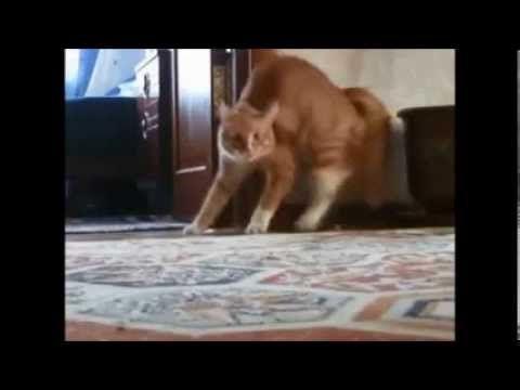Şaşkın Kedi Videoları | Kediler Hakkında
