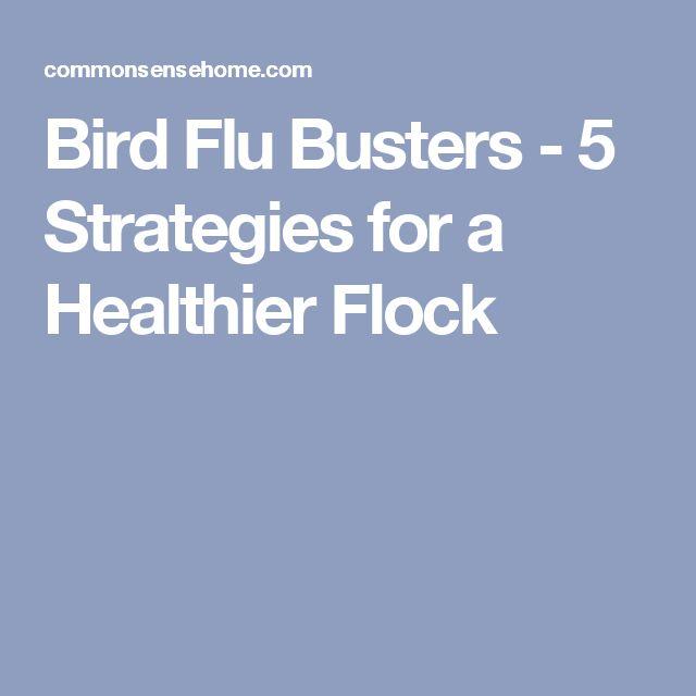 Bird Flu Busters - 5 Strategies for a Healthier Flock