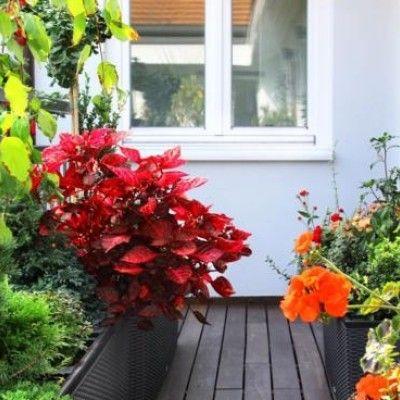 Sprawdź, jaką farbę wybrać i namaluj swój idealny balkon.