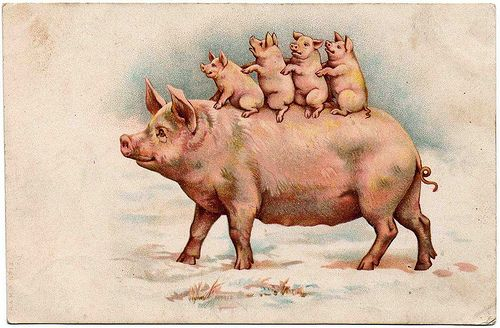 Down with bacon!: Vintage Postcards, Piggy Piggy, Piglets Poster, Oink Oink, Piggy Piglets, Pigs Art, Baconwackystuff Flickr, Pigs Postcards, Lucky Pigs