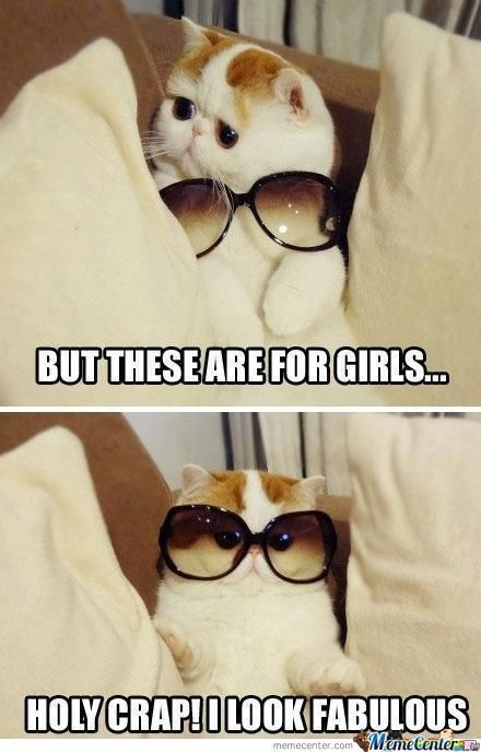 Top 25 Funny Animals Photos and Memes | Quotes and Humor