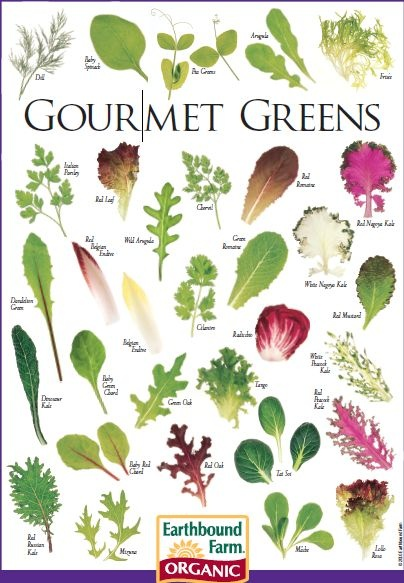 Types of lettuce to grow.