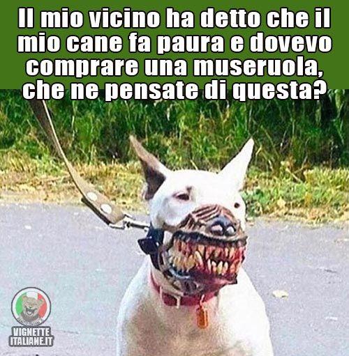 Il cane mascherato