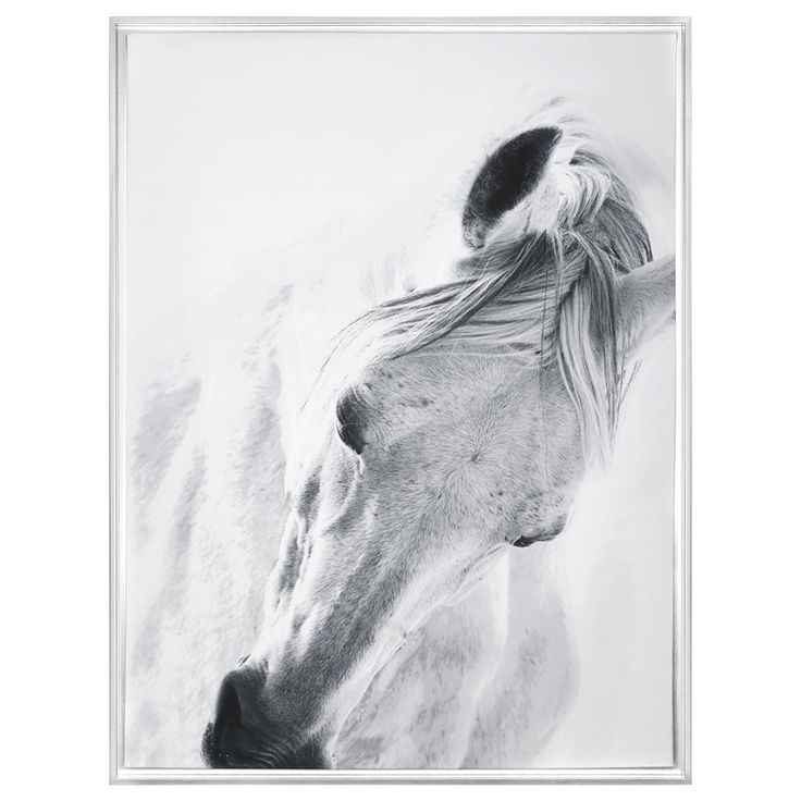 Framed Art White Horse Framed Art Wall Decor Bouclair