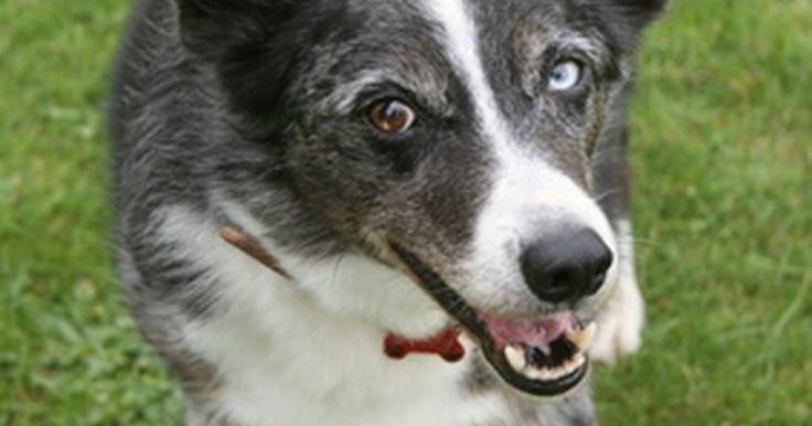 Cómo ayudar a detener los tumores grasosos en los perros. Los tumores grasosos se conocen como lipomas. Estos son tumores benignos que consisten en depósitos de grasa que salen bajo la piel. En perros, pueden encontrarse de forma frecuente en el estómago y la parte superior de las patas. Algunas razas son más susceptibles a este tipo de tumores como los Dobermans, Schnauzers miniaturas y los Retrievers. ...