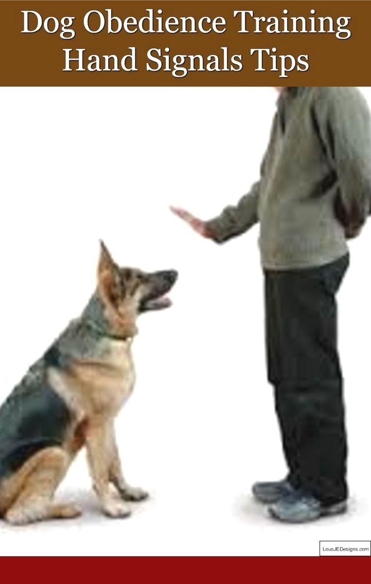 Train A Service Dog Ontario And Pics Of How To Train Your Dog To