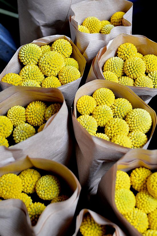 Dutch imported Billy buttons - never knew what these were called! totally want them in my bouquet!