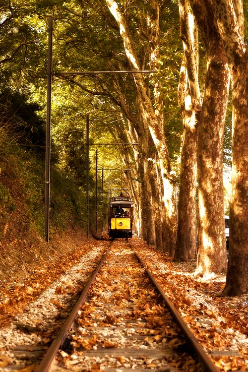 The Autumn Tram, by Jorge Mala
