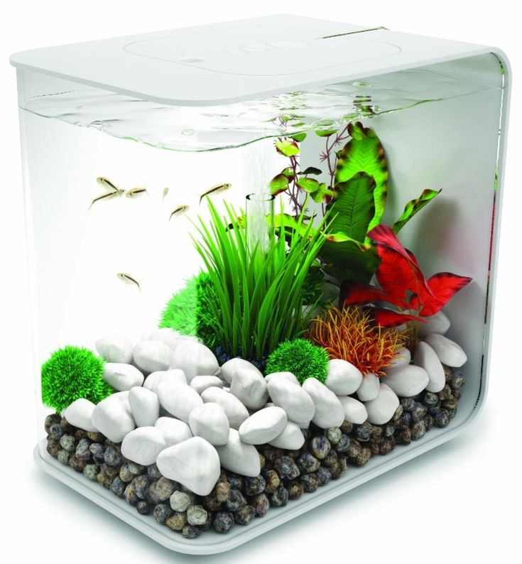Best 25 small fish tanks ideas on pinterest fish tank for Small fish tank